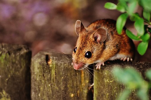 Het meisje en de muis…